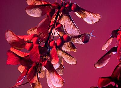 Vruchten uit Oost, foto's van Margareta Svensson